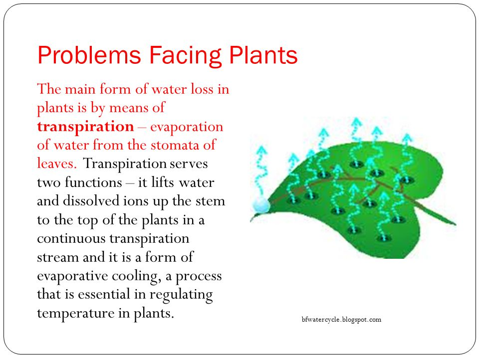 Problems Facing Plants Those plants that live in areas where water is in limited supply (usually hot, dry areas) must achieve a balance between how much water the plant can afford to lose for cooling purposes and the risk of dehydration.