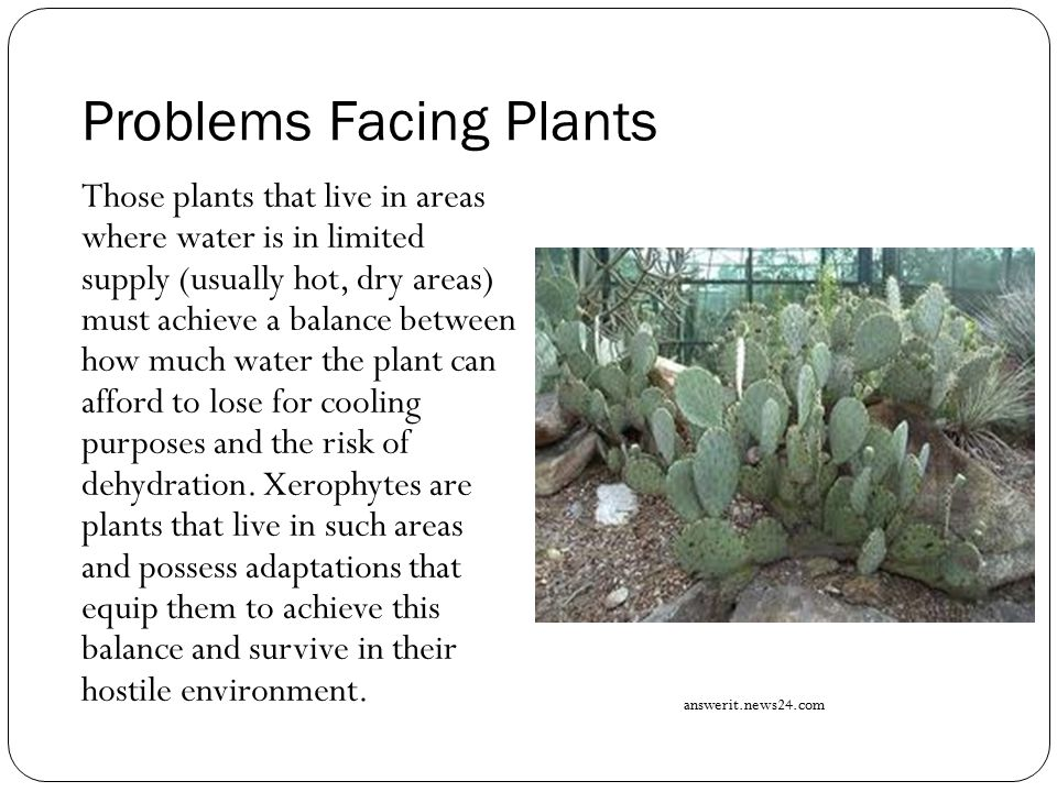 Problems Facing Plants Those plants that live in areas where water is in limited supply (usually hot, dry areas) must achieve a balance between how mu