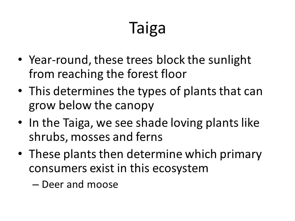 Taiga Year-round, these trees block the sunlight from reaching the forest floor This determines the types of plants that can grow below the canopy In