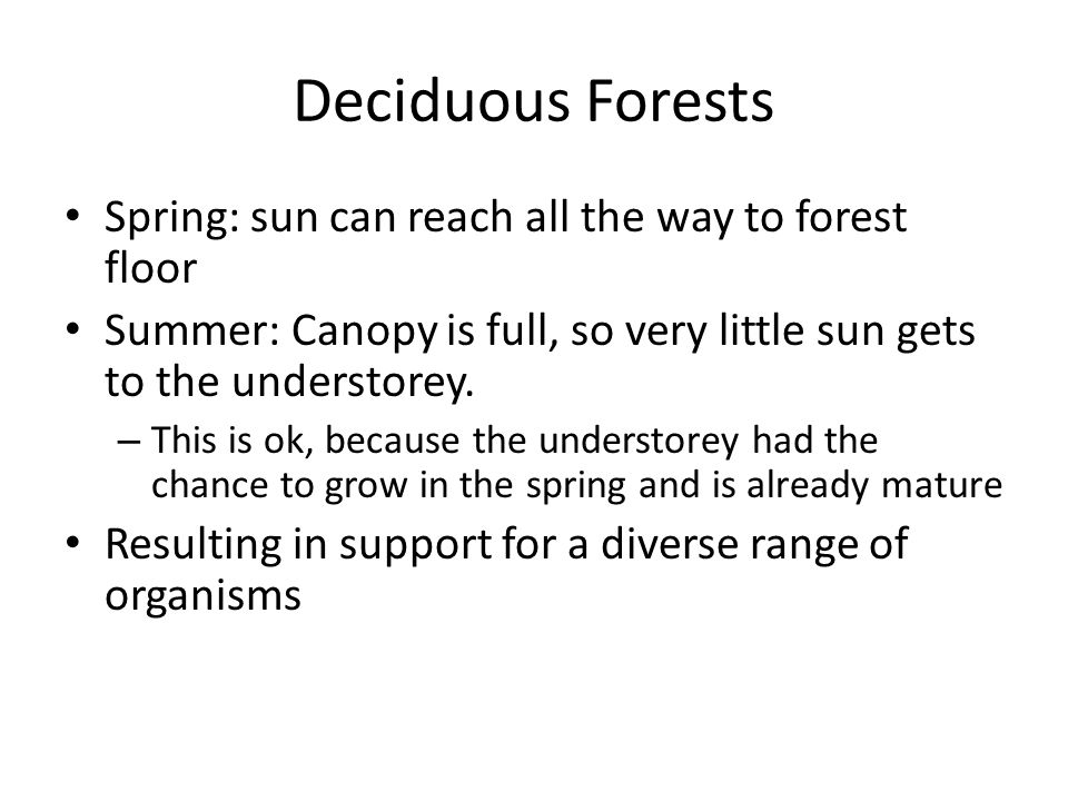 Deciduous Forests Spring: sun can reach all the way to forest floor Summer: Canopy is full, so very little sun gets to the understorey. – This is ok,