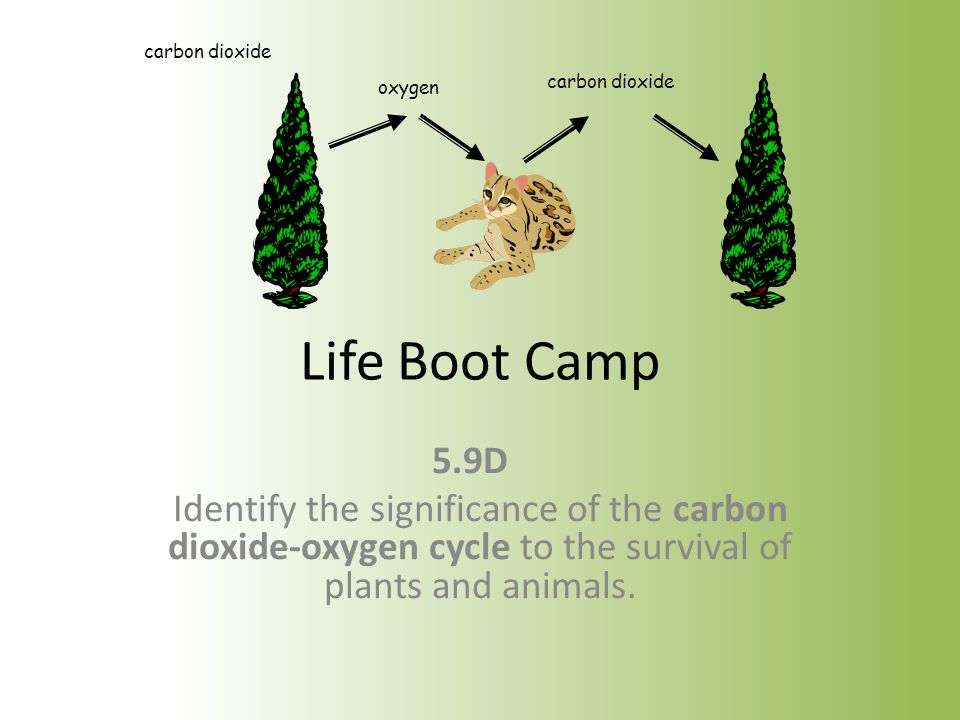 22.What do plants give off as a waste product during photosynthesis.