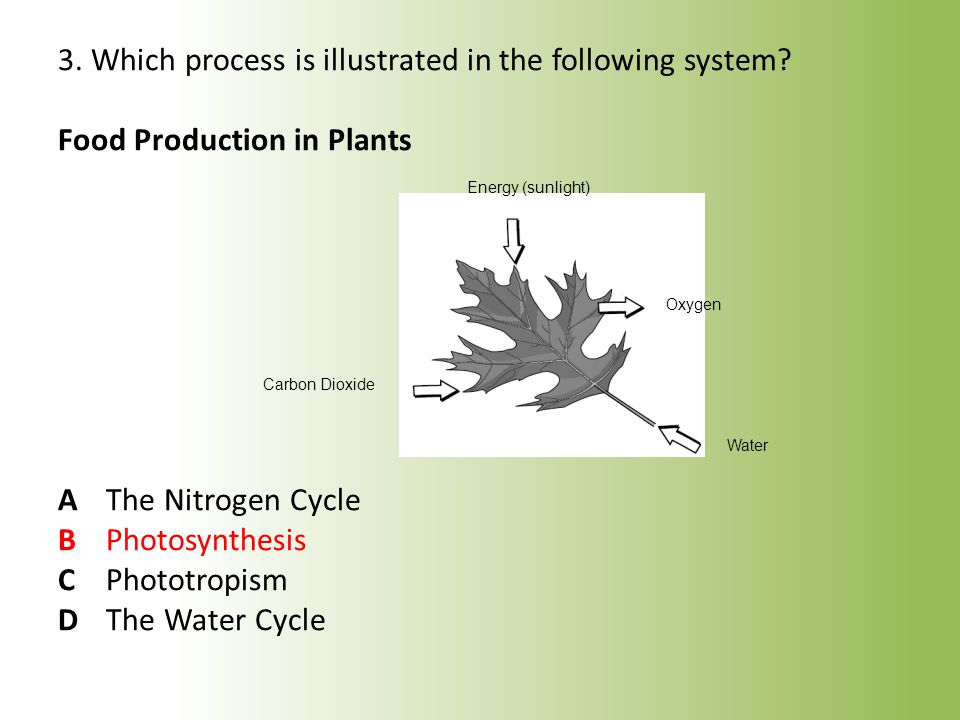 4.During which of the following processes does a plant use sunlight to produce its own food.