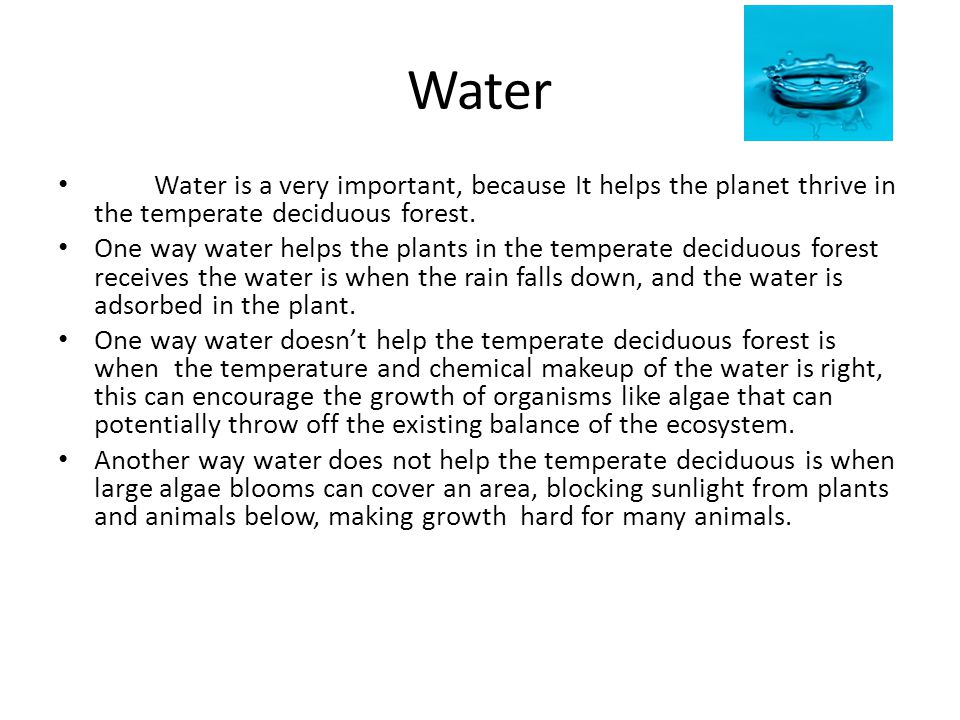 Water Water is a very important, because It helps the planet thrive in the temperate deciduous forest. One way water helps the plants in the temperate