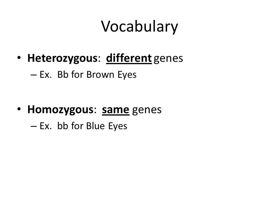 Vocabulary Heterozygous: different genes – Ex. Bb for Brown Eyes Homozygous: same genes – Ex.