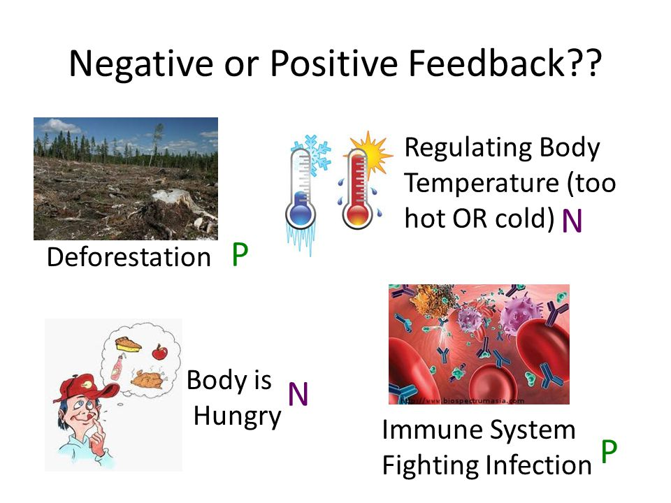 Negative or Positive Feedback?? Deforestation Regulating Body Temperature (too hot OR cold) Immune System Fighting Infection Body is Hungry P P N N