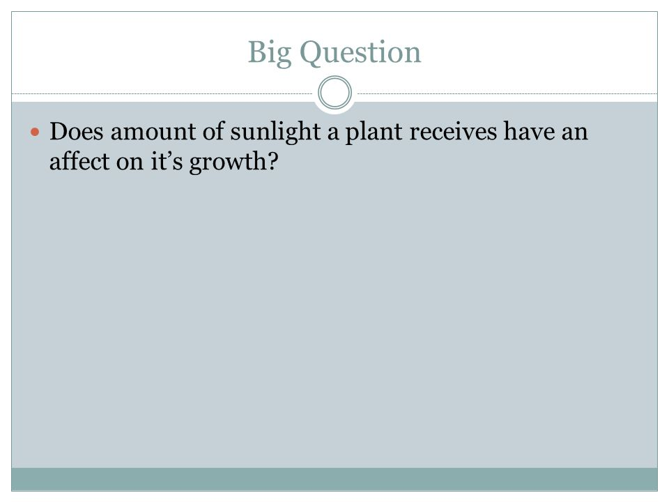 Big Question Does amount of sunlight a plant receives have an affect on it's growth