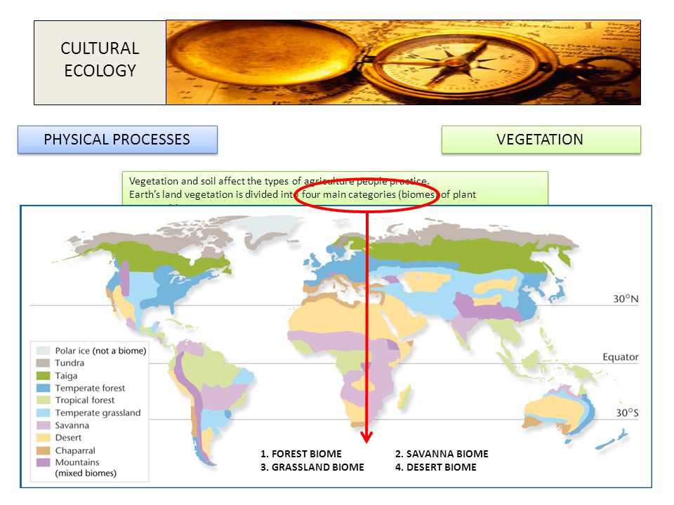 VEGETATION Vegetation and soil affect the types of agriculture people practice. Earth's land vegetation is divided into four main categories (biomes)