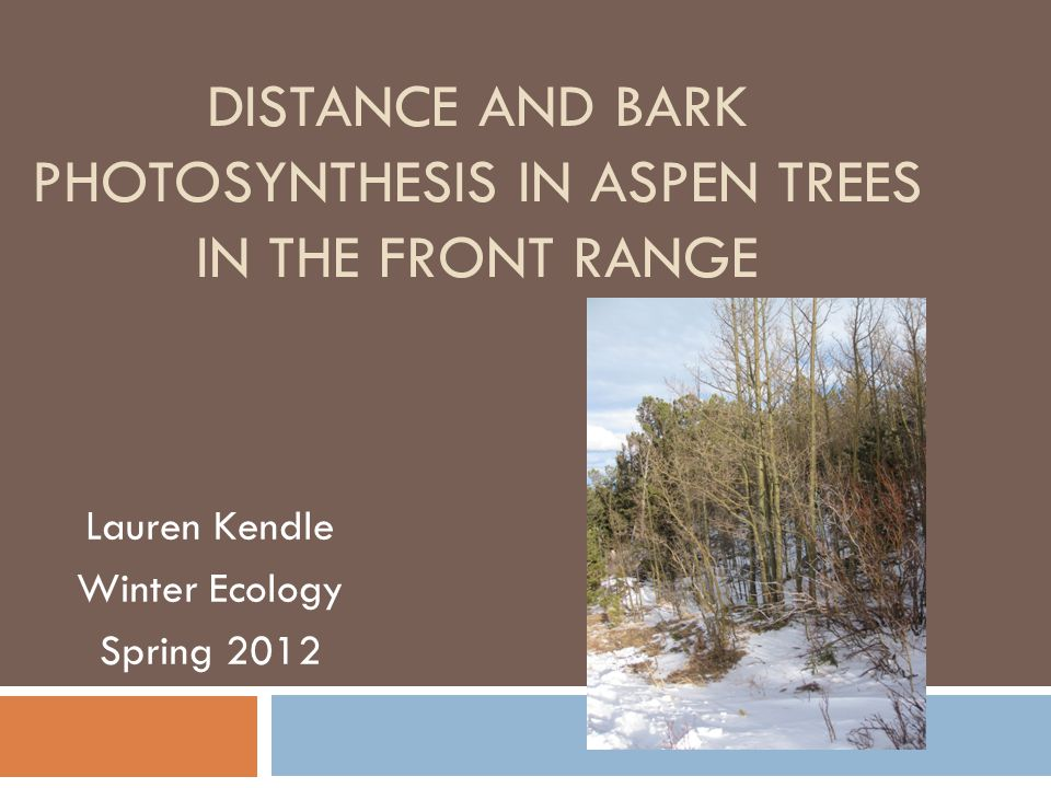 DISTANCE AND BARK PHOTOSYNTHESIS IN ASPEN TREES IN THE FRONT RANGE Lauren Kendle Winter Ecology Spring 2012