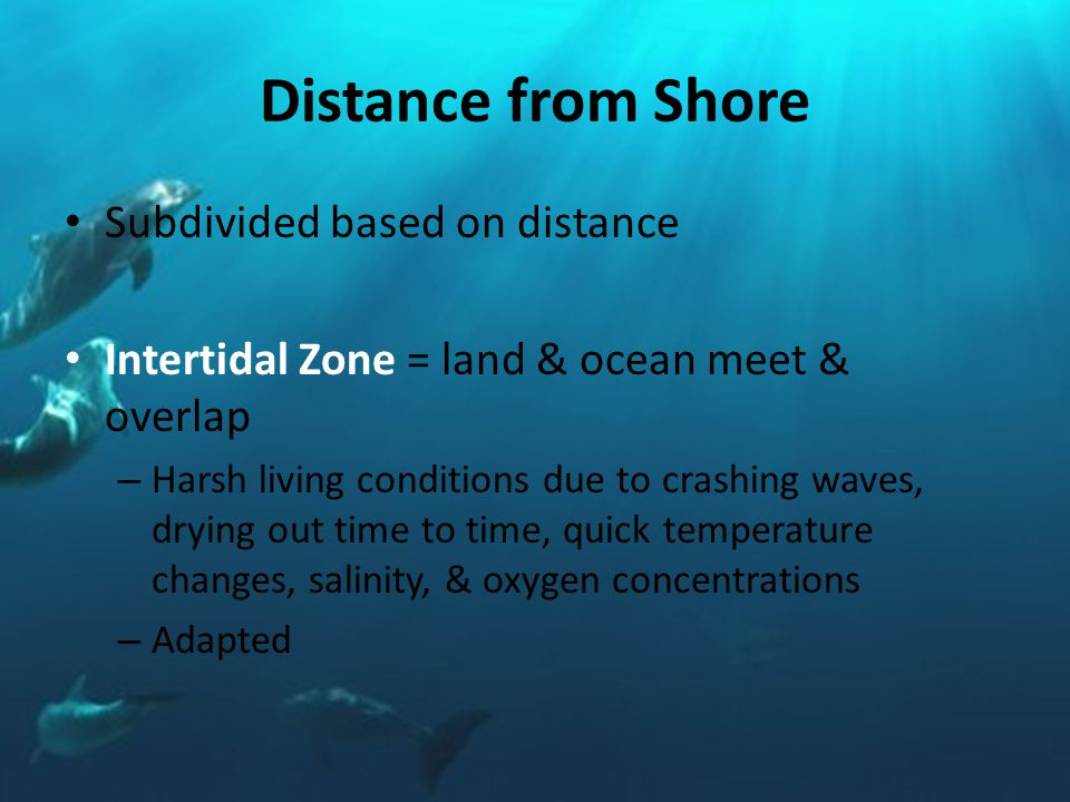Distance from Shore Subdivided based on distance Intertidal Zone = land & ocean meet & overlap – Harsh living conditions due to crashing waves, drying out time to time, quick temperature changes, salinity, & oxygen concentrations – Adapted
