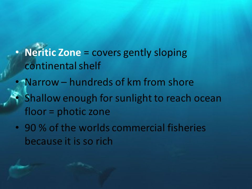 Neritic Zone = covers gently sloping continental shelf Narrow – hundreds of km from shore Shallow enough for sunlight to reach ocean floor = photic zone 90 % of the worlds commercial fisheries because it is so rich