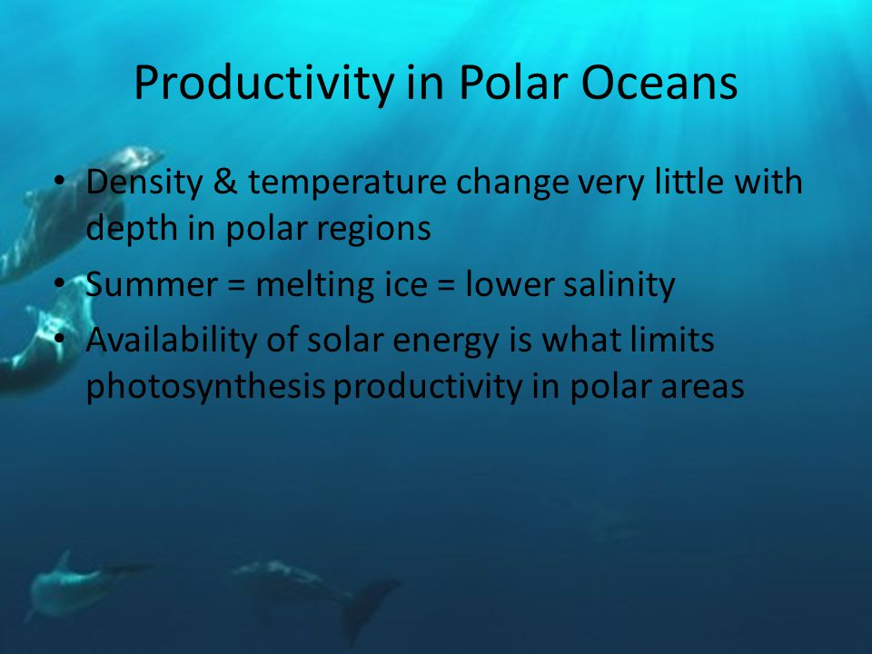 Productivity in Polar Oceans Density & temperature change very little with depth in polar regions Summer = melting ice = lower salinity Availability of solar energy is what limits photosynthesis productivity in polar areas