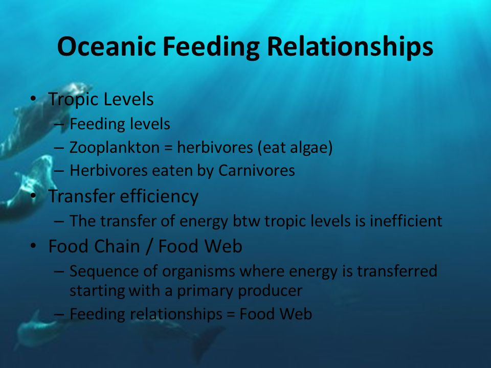 Oceanic Feeding Relationships Tropic Levels – Feeding levels – Zooplankton = herbivores (eat algae) – Herbivores eaten by Carnivores Transfer efficiency – The transfer of energy btw tropic levels is inefficient Food Chain / Food Web – Sequence of organisms where energy is transferred starting with a primary producer – Feeding relationships = Food Web