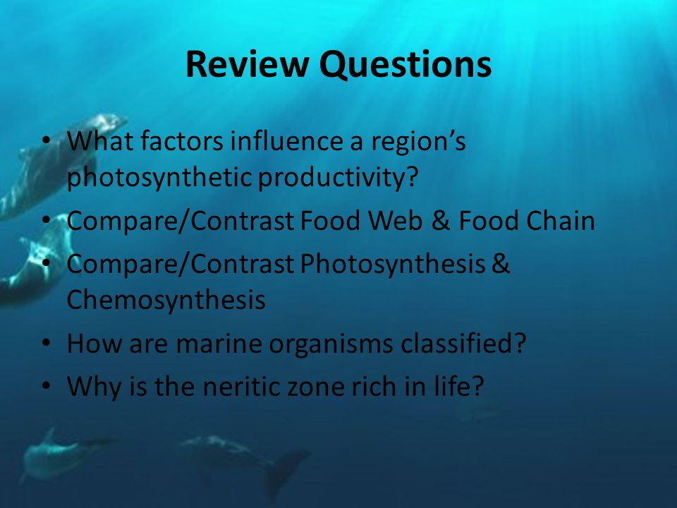 Review Questions What factors influence a region's photosynthetic productivity.