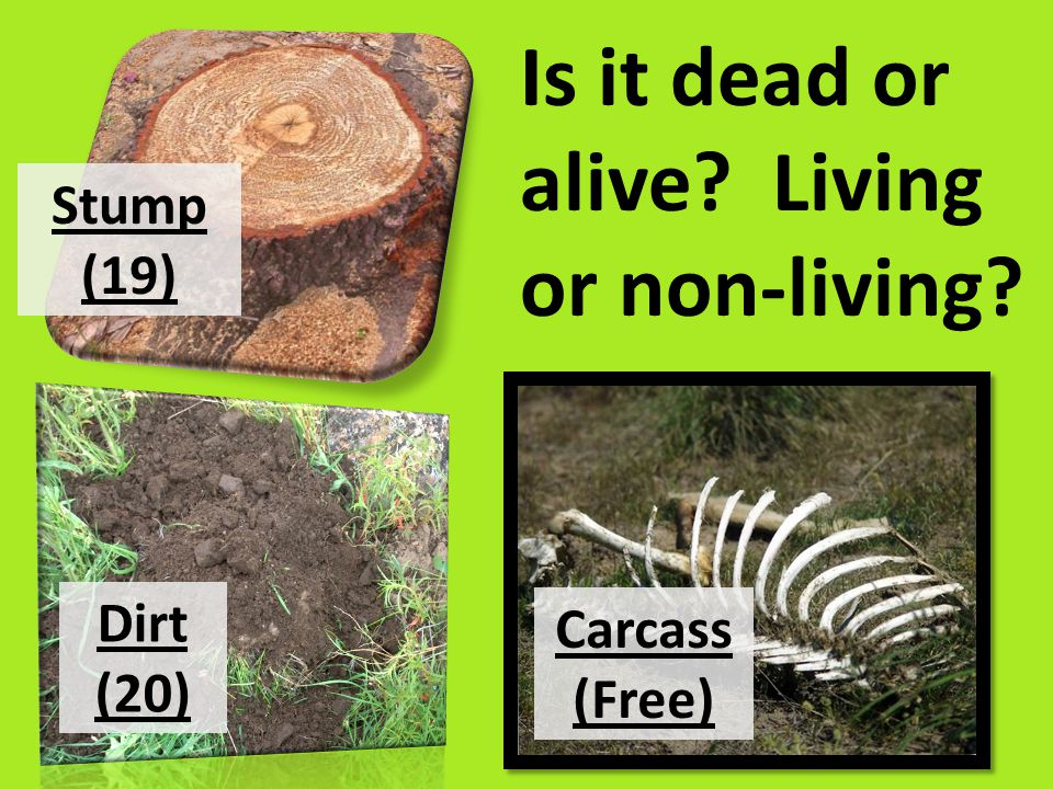 Is it dead or alive Living or non-living Stump (19) Dirt (20) Carcass (Free)