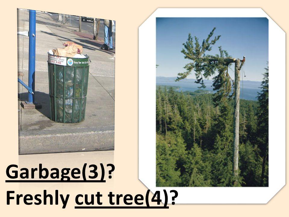 Garbage(3)? Freshly cut tree(4)?