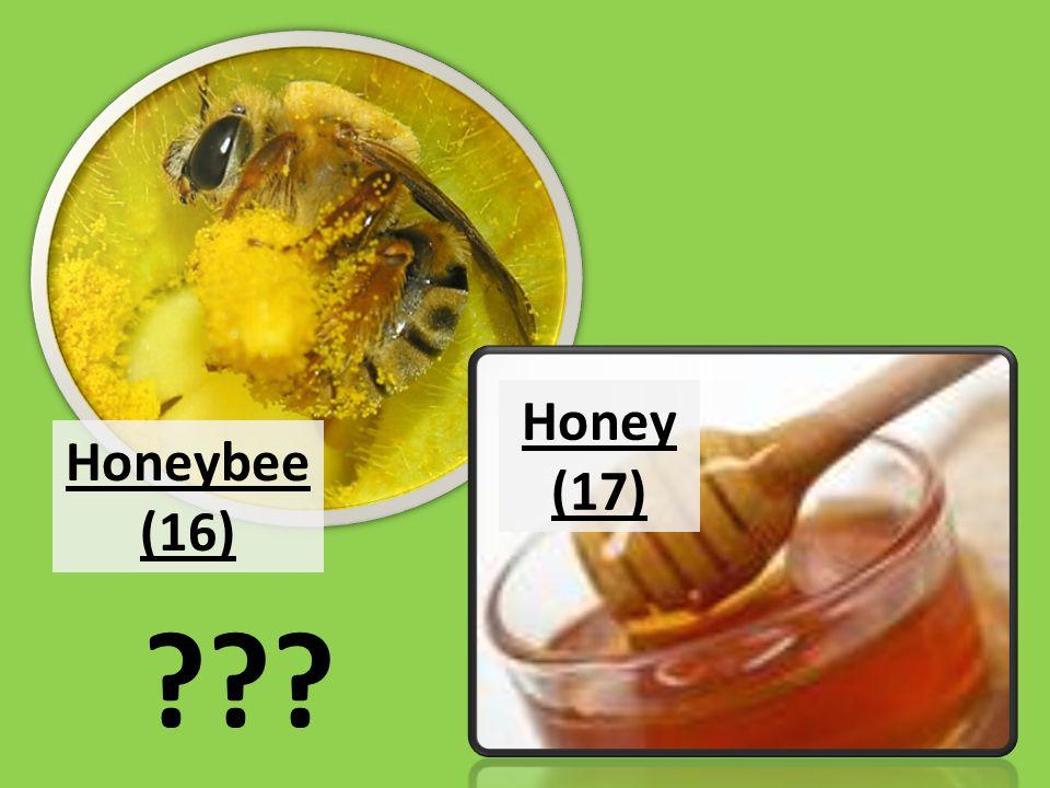 ??? Honeybee (16) Honey (17)