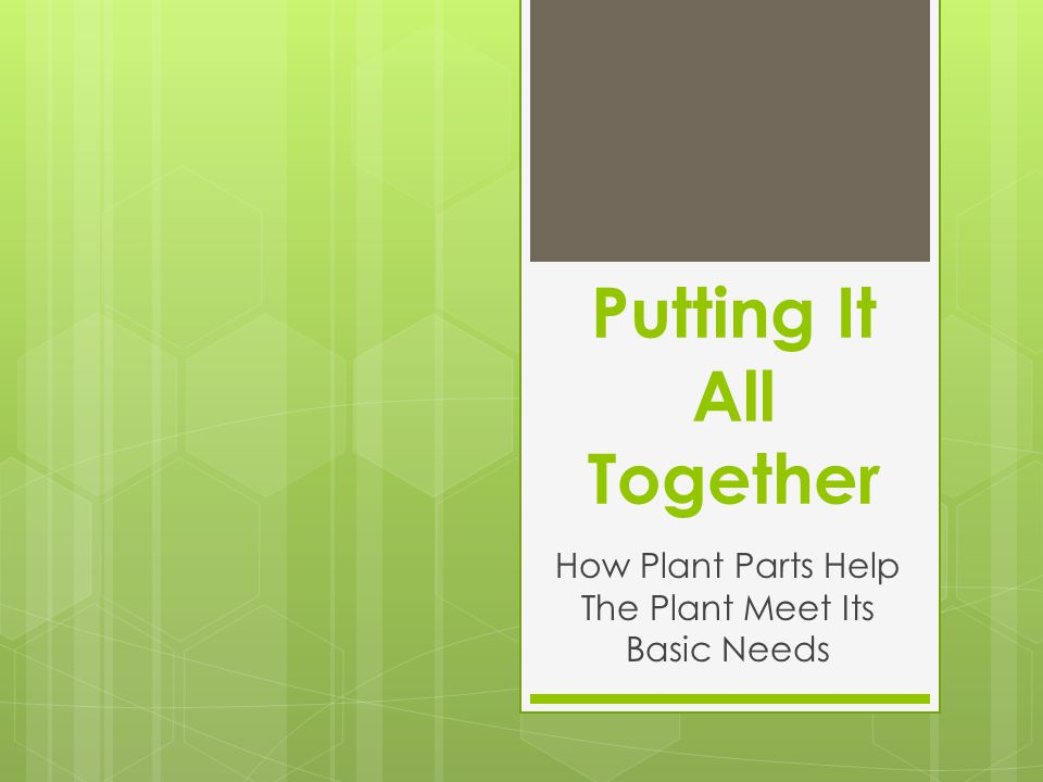 Putting It All Together How Plant Parts Help The Plant Meet Its Basic Needs