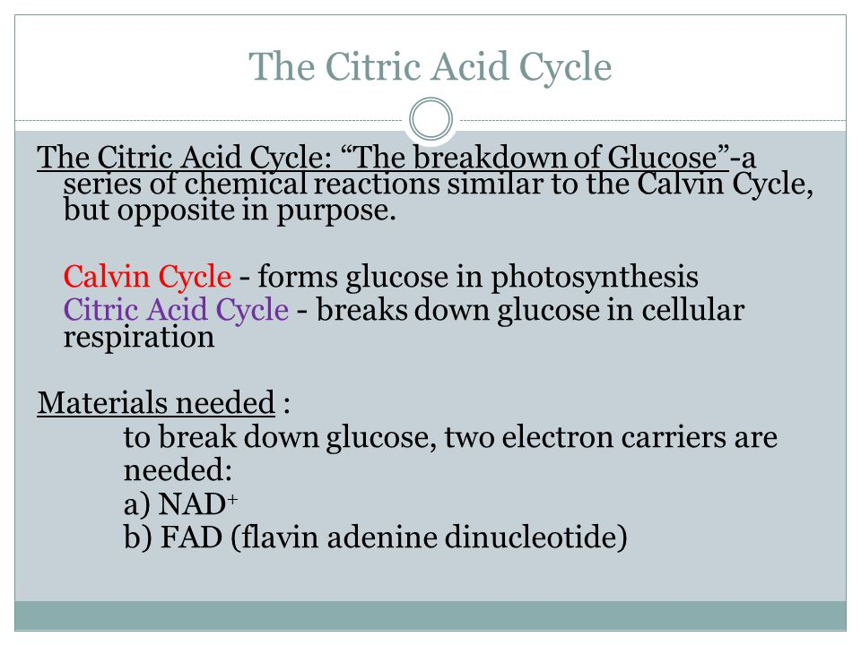 """The Citric Acid Cycle The Citric Acid Cycle: """"The breakdown of Glucose""""-a series of chemical reactions similar to the Calvin Cycle, but opposite in pu"""