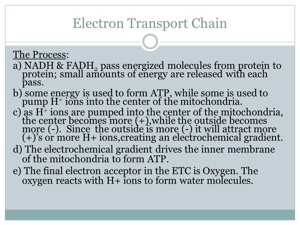 Electron Transport Chain The Process: a) NADH & FADH 2 pass energized molecules from protein to protein; small amounts of energy are released with eac