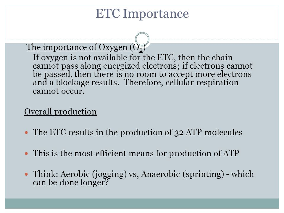 ETC Importance The importance of Oxygen (O 2 ) If oxygen is not available for the ETC, then the chain cannot pass along energized electrons; if electr