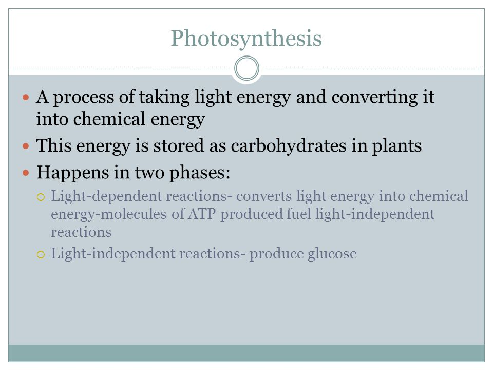 Where does photosynthesis occur.