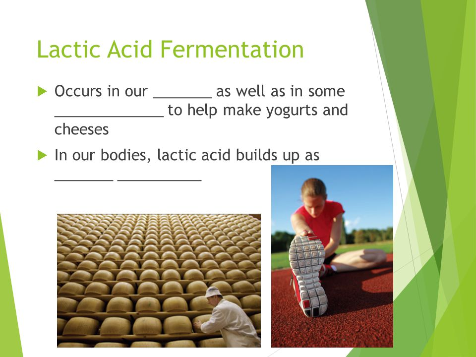 Lactic Acid Fermentation  Occurs in our _______ as well as in some _____________ to help make yogurts and cheeses  In our bodies, lactic acid builds