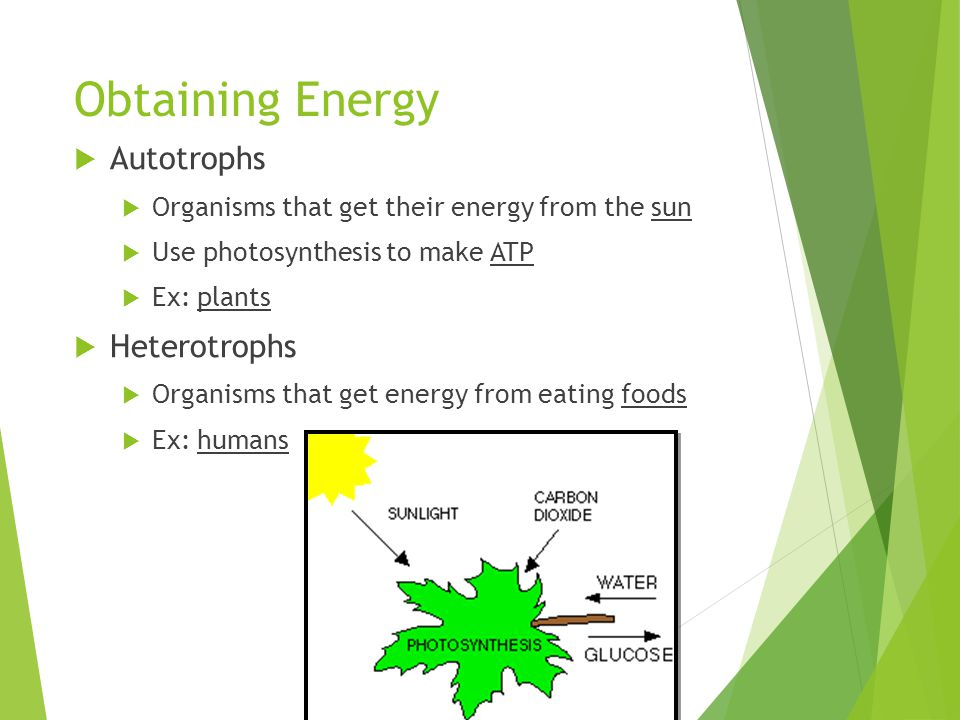 Why is photosynthesis important.