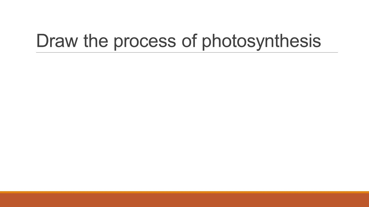Draw the process of photosynthesis