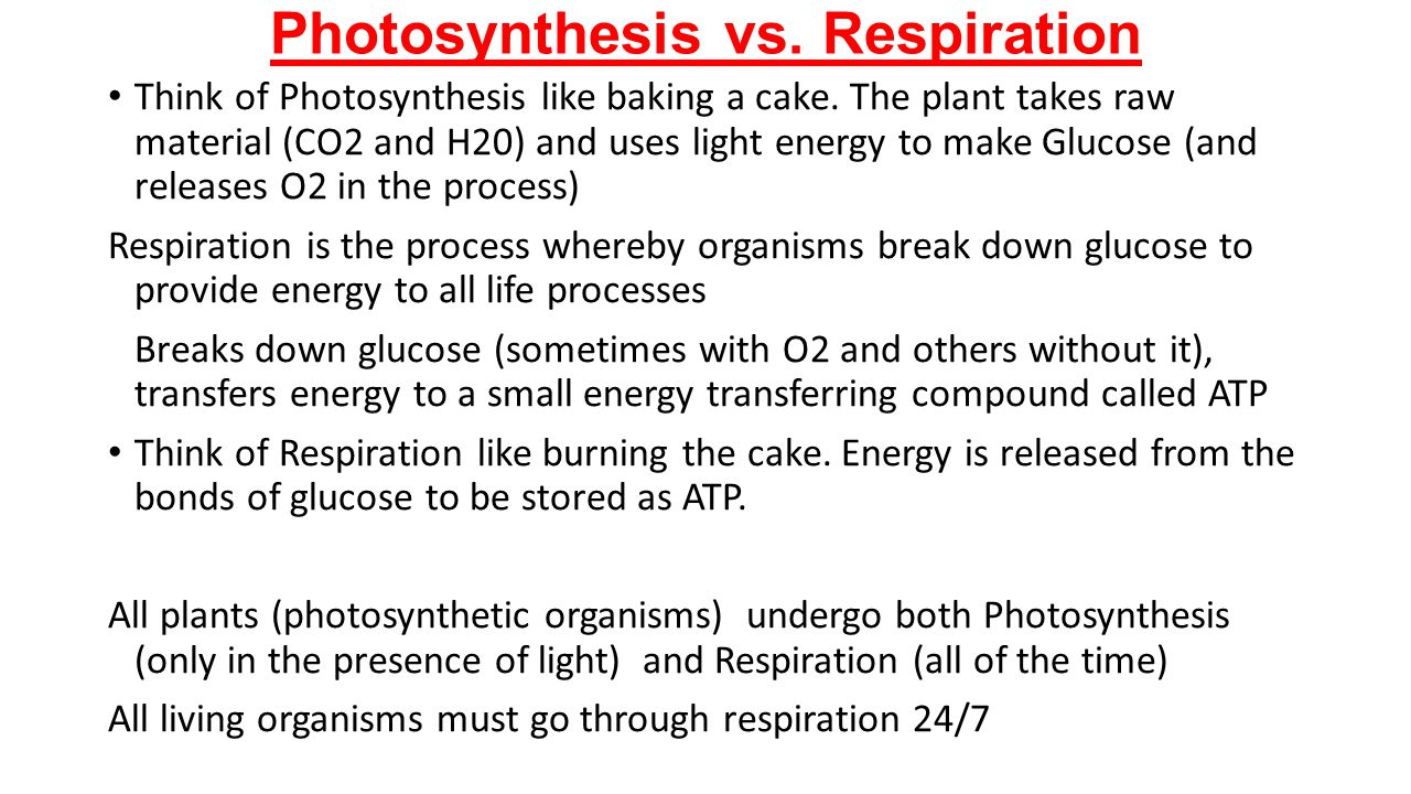 Photosynthesis vs. Respiration Think of Photosynthesis like baking a cake. The plant takes raw material (CO2 and H20) and uses light energy to make Gl