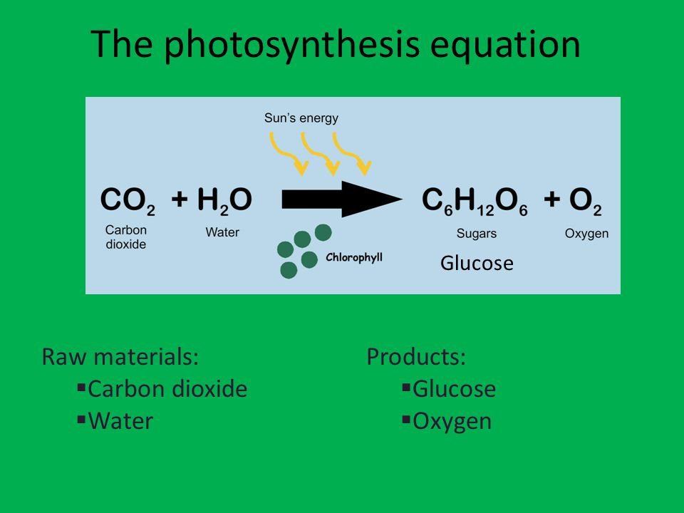 The photosynthesis equation Raw materials:  Carbon dioxide  Water Products:  Glucose  Oxygen Glucose