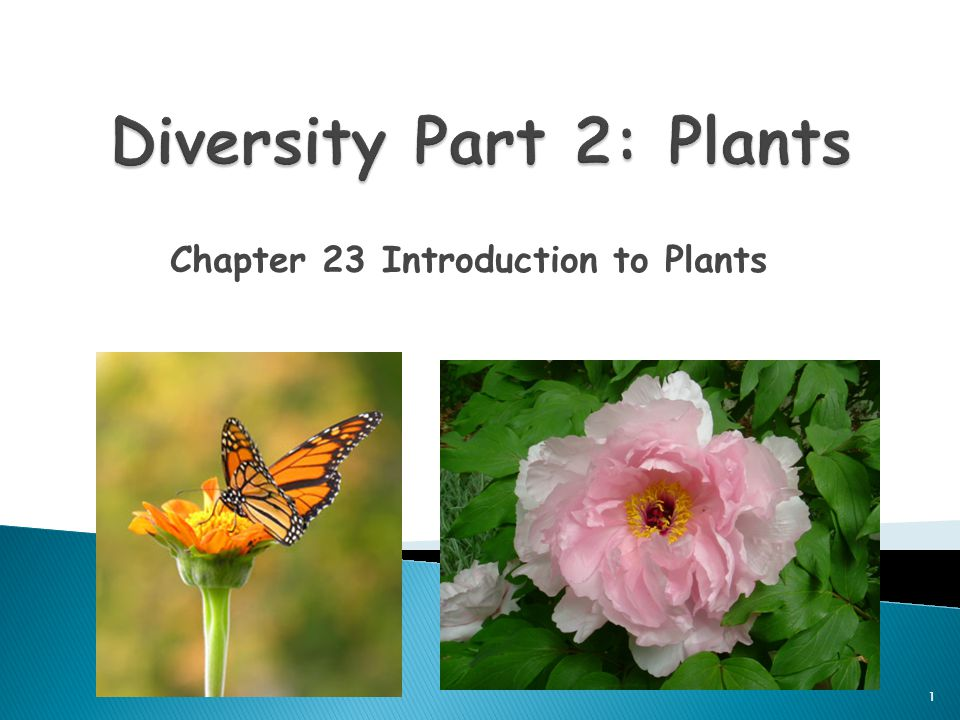 Chapter 23 Introduction to Plants 1