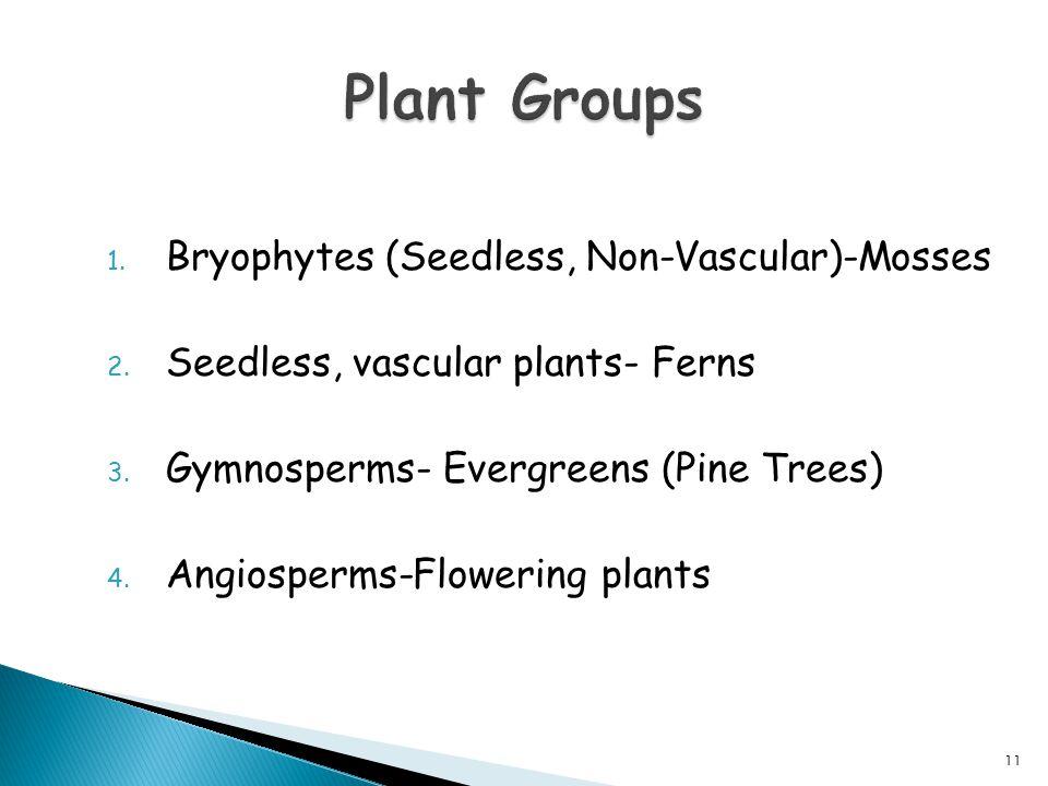 1. Bryophytes (Seedless, Non-Vascular)-Mosses 2. Seedless, vascular plants- Ferns 3. Gymnosperms- Evergreens (Pine Trees) 4. Angiosperms-Flowering pla