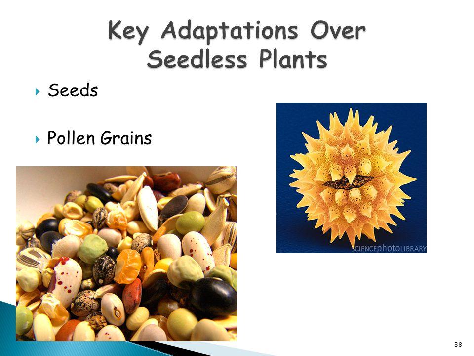  Seeds  Pollen Grains 38