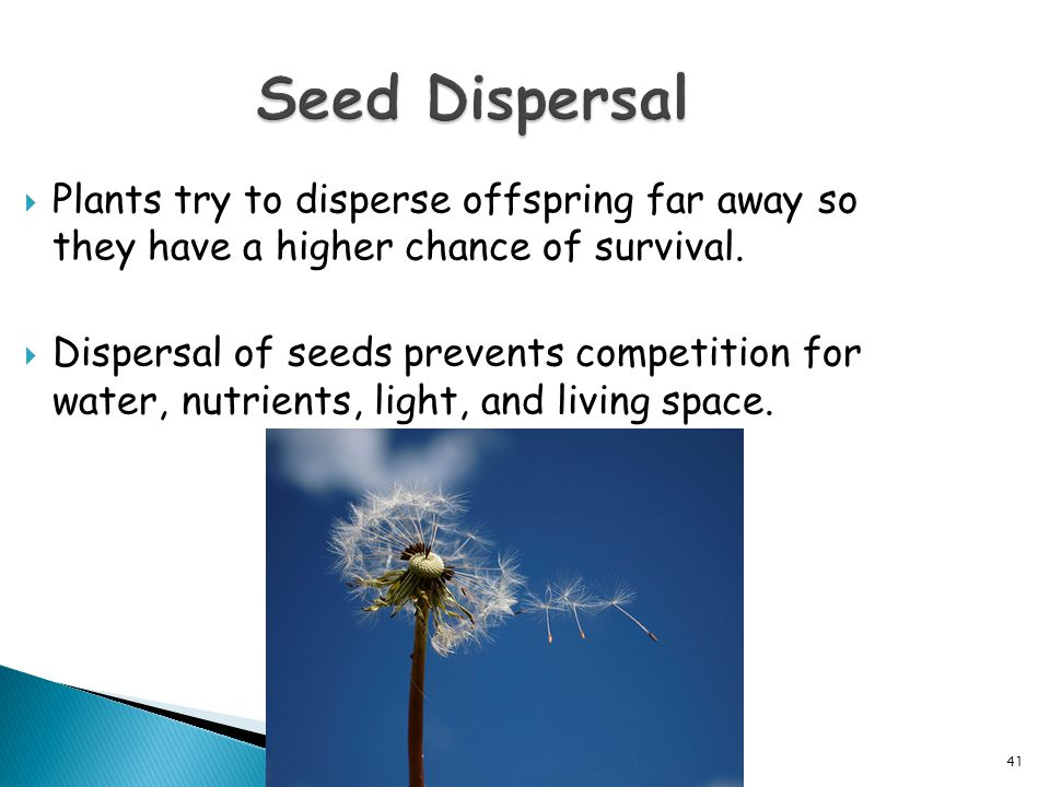  Plants try to disperse offspring far away so they have a higher chance of survival.  Dispersal of seeds prevents competition for water, nutrients,