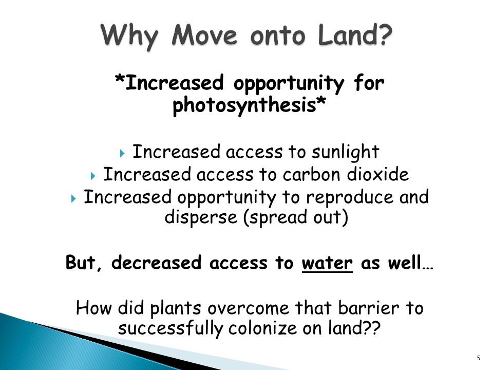  Mycorrhizae is a mutualistic relationship between plants and fungi to help a plant absorb water and nutrients from the soil.
