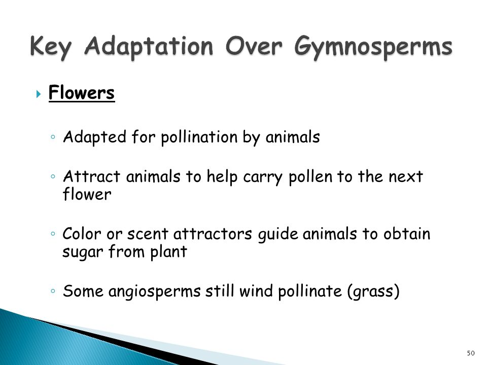  Flowers ◦ Adapted for pollination by animals ◦ Attract animals to help carry pollen to the next flower ◦ Color or scent attractors guide animals to