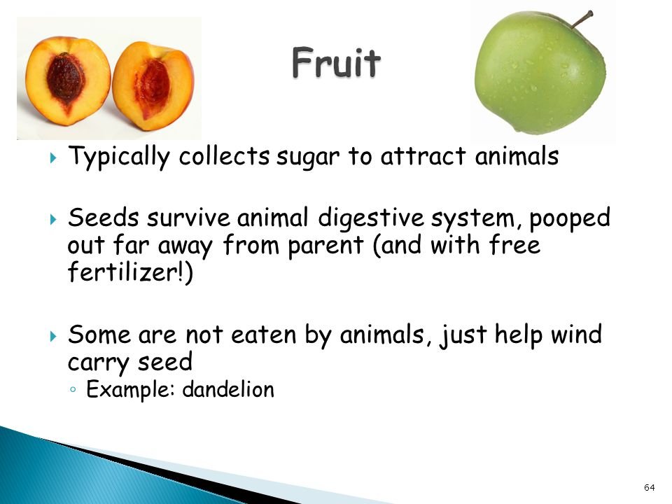  Typically collects sugar to attract animals  Seeds survive animal digestive system, pooped out far away from parent (and with free fertilizer!)  S