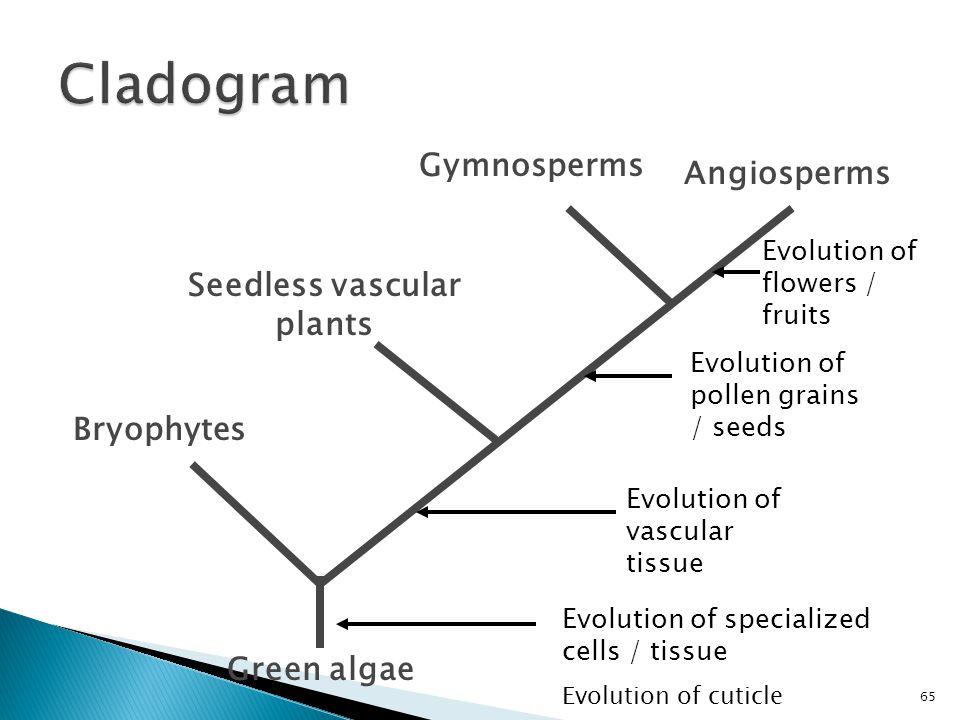 Bryophytes Green algae Seedless vascular plants Gymnosperms Angiosperms Evolution of specialized cells / tissue Evolution of cuticle Evolution of vasc