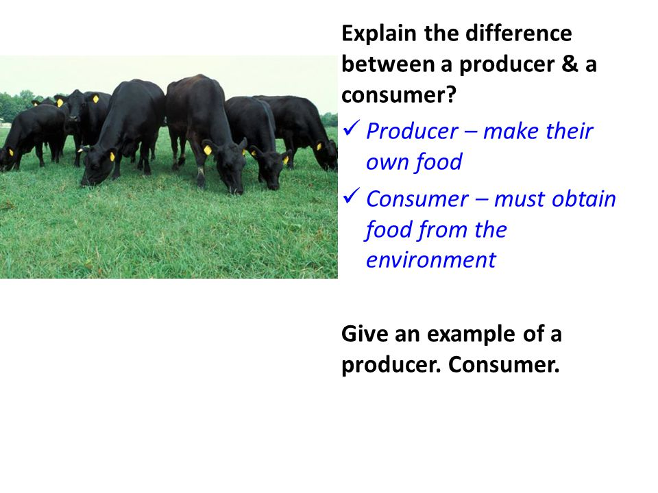 Explain the difference between a producer & a consumer? Producer – make their own food Consumer – must obtain food from the environment Give an exampl