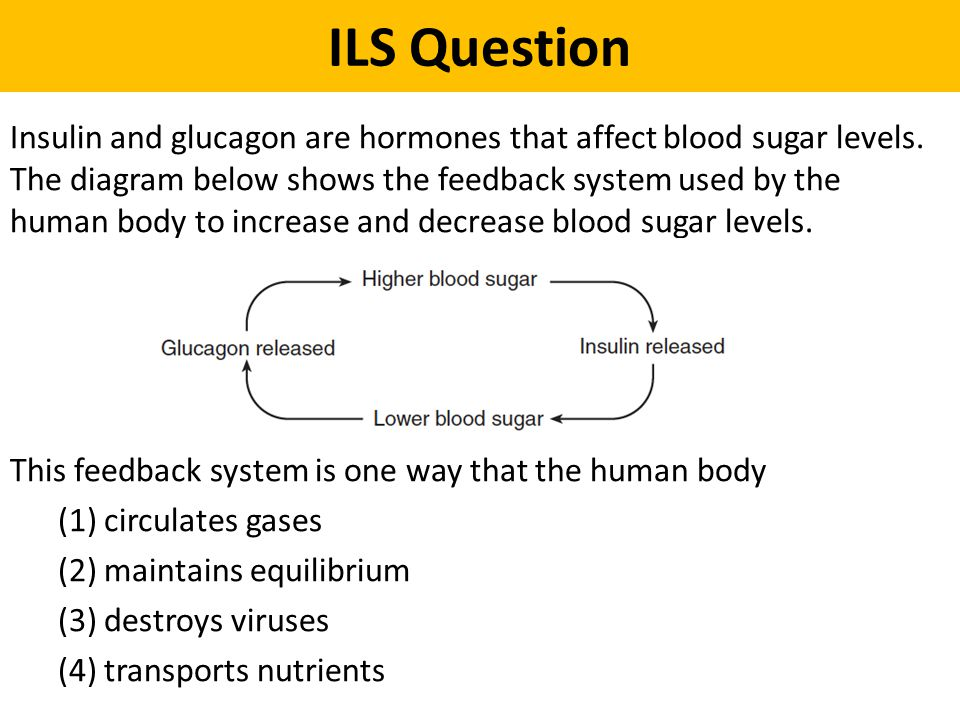 ILS Question Insulin and glucagon are hormones that affect blood sugar levels. The diagram below shows the feedback system used by the human body to i