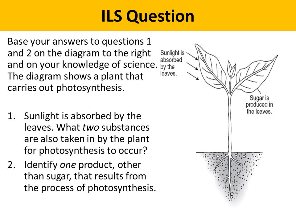 ILS Question Base your answers to questions 1 and 2 on the diagram to the right and on your knowledge of science. The diagram shows a plant that carri