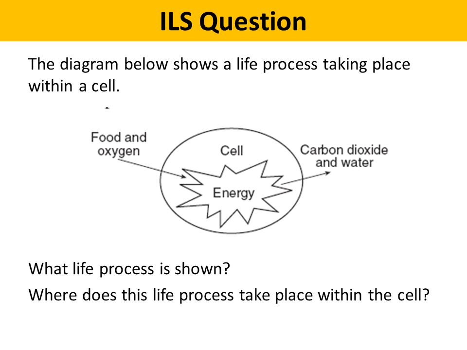 ILS Question The diagram below shows a life process taking place within a cell. What life process is shown? Where does this life process take place wi
