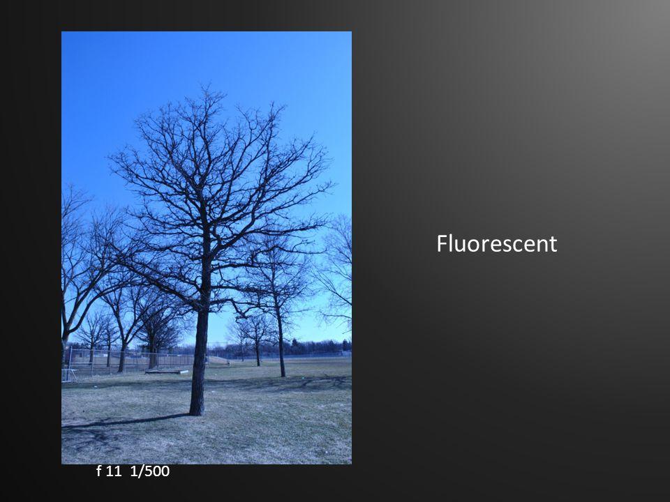 Fluorescent f 11 1/500