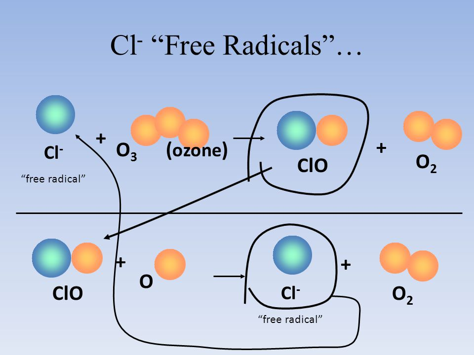 "Cl - ""Free Radicals""… Cl - ""free radical"" O 3 ( ozone ) + O2O2 ClO + + O Cl - ""free radical"" + O2O2"