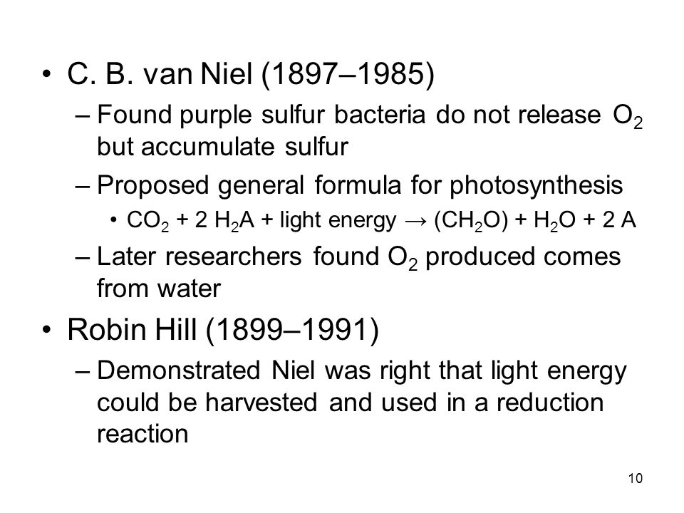 10 C. B. van Niel (1897–1985) –Found purple sulfur bacteria do not release O 2 but accumulate sulfur –Proposed general formula for photosynthesis CO 2