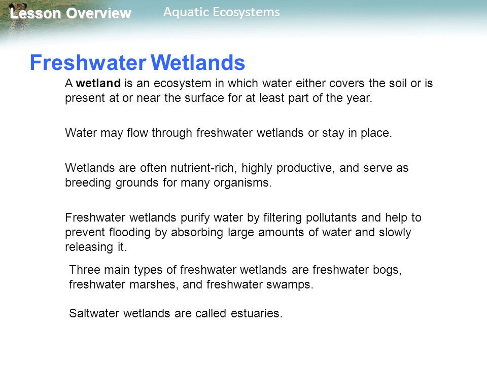 Lesson Overview Lesson Overview Aquatic Ecosystems Freshwater Wetlands A wetland is an ecosystem in which water either covers the soil or is present a