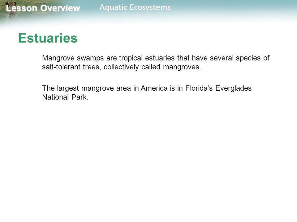 Lesson Overview Lesson Overview Aquatic Ecosystems Estuaries Mangrove swamps are tropical estuaries that have several species of salt-tolerant trees,