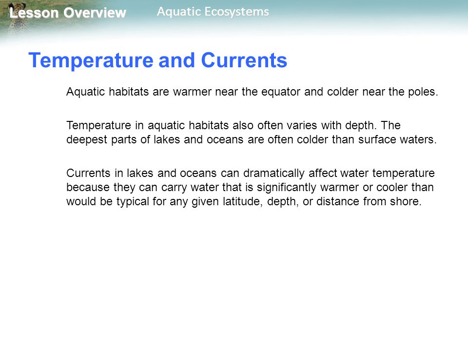 Lesson Overview Lesson Overview Aquatic Ecosystems Temperature and Currents Aquatic habitats are warmer near the equator and colder near the poles. Te