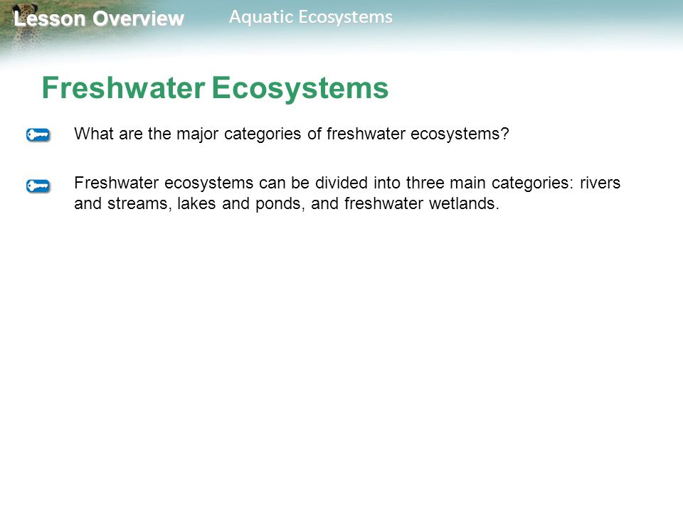 Lesson Overview Lesson Overview Aquatic Ecosystems Freshwater Ecosystems What are the major categories of freshwater ecosystems? Freshwater ecosystems