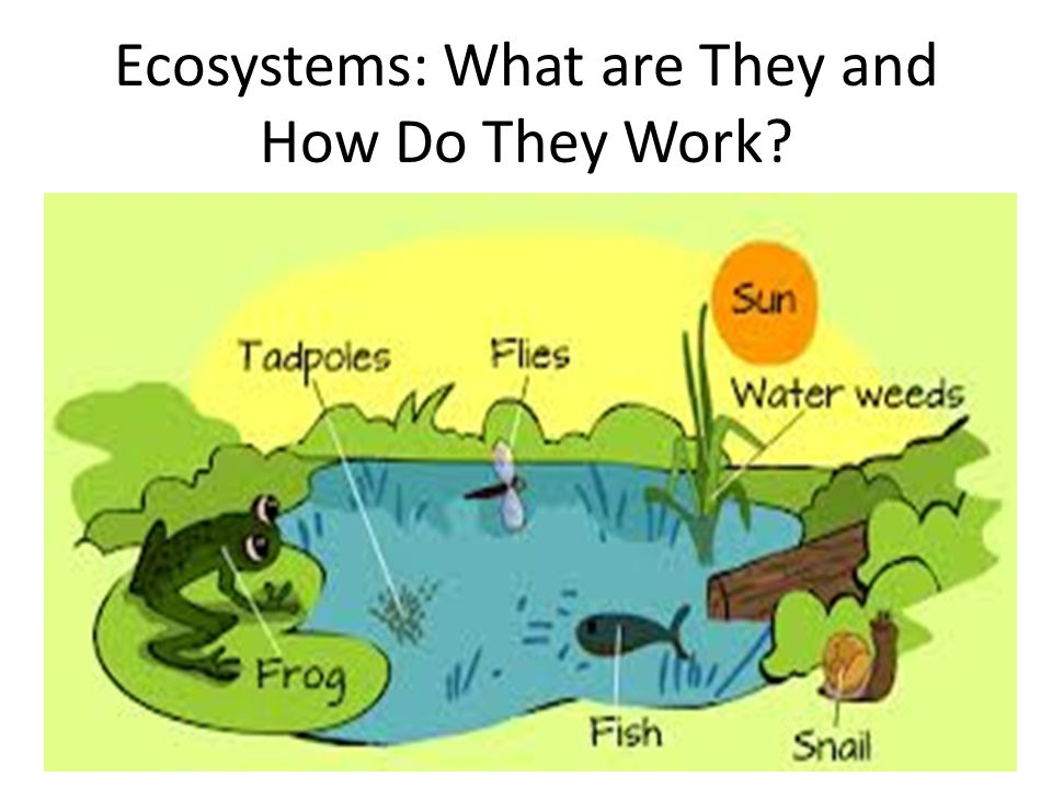 What is Ecology.It is the study of how organisms interact with each other.